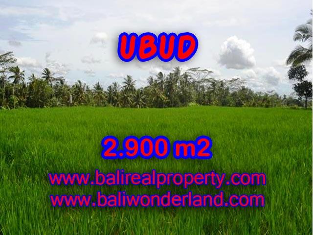 Fantastic Land for sale in Ubud Bali, rice field view in Ubud Payangan – TJUB356