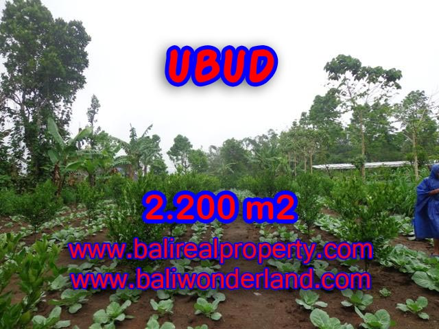 Land for sale in Ubud, Magnificent view in Ubud Tegalalang Bali – TJUB348