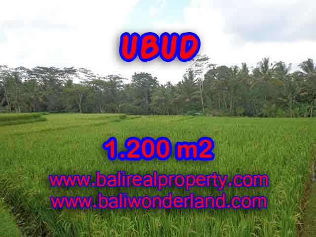 Fantastic Land for sale in Bali, ricefields and mountain view in Ubud Payangan– TJUB400