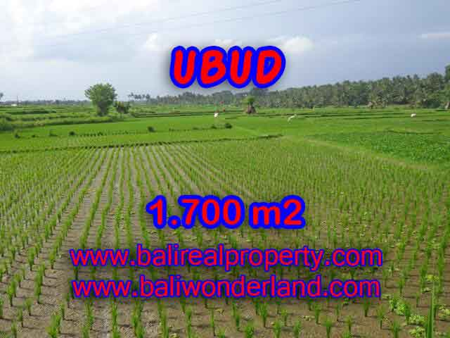 Land in Bali for sale, extraordinary view in Ubud Center – TJUB398
