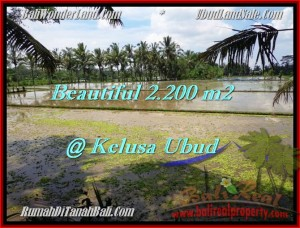 Exotic 2,200 m2 LAND IN UBUD FOR SALE TJUB475