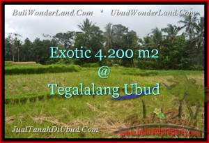 Beautiful LAND FOR SALE IN Ubud Tegalalang BALI TJUB461