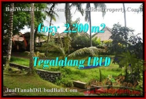 Beautiful LAND FOR SALE IN Ubud Tegalalang BALI TJUB462