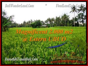 Beautiful PROPERTY 2,000 m2 LAND SALE IN UBUD BALI TJUB485