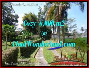 Exotic PROPERTY Sentral Ubud 6,000 m2 LAND FOR SALE TJUB507