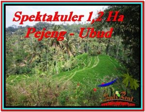 FOR SALE Exotic 12,000 m2 LAND IN UBUD BALI TJUB520